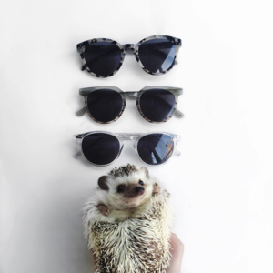 A hedgehog with three pairs of sunglasses from Eyebuydirect on Instagram